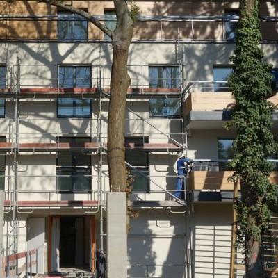 Conserver les arbres matures lors d'un chantier : compliqué, certes, mais pas impossible (Orsay)